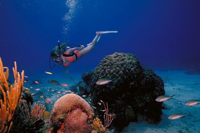 submarinismo caiman