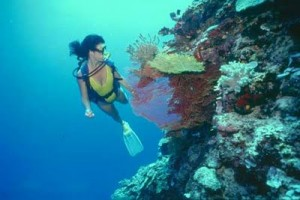 Roatan Honduras dive